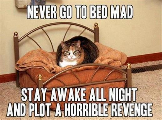 Cat - NEVER GO TO BED MAD STAY AWAKE ALL NIGHT AND PLOT A HORRIBLE REVENGE