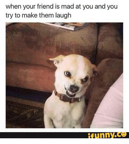 Dog - when your friend is mad at you and you try to make them laugh Runny.co