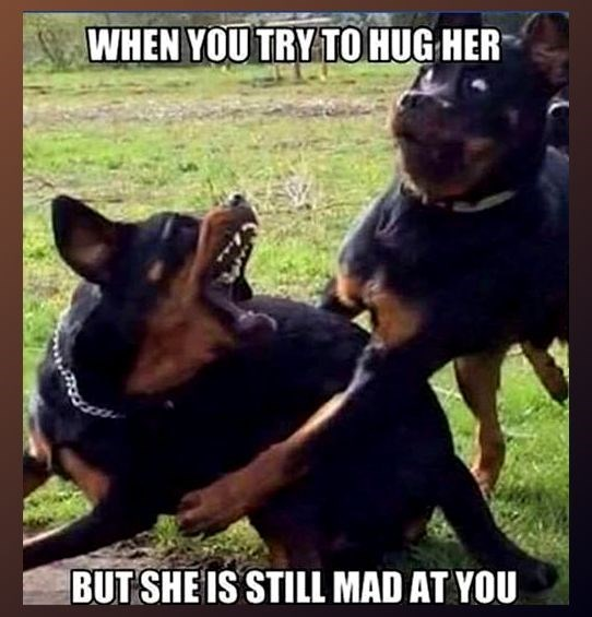 Dog - WHEN YOU TRY TO HUG HER BUT SHEIS STILL MAD AT YOU