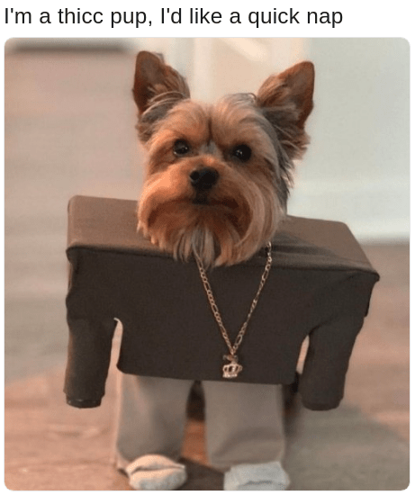 funny meme of a dog dressed like lil pump and Kanye west in the I Love It video with rhyming caption