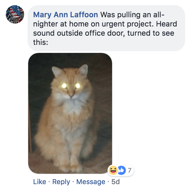 Cat - Mary Ann Laffoon Was pulling an all- nighter at home on urgent project. Heard sound outside office door, turned to see this: B 7 Like Reply Message 5d