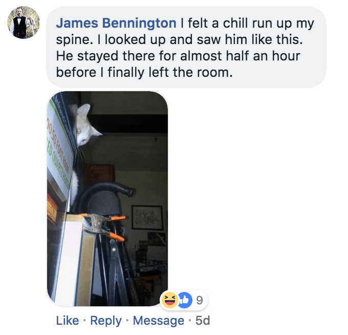 Product - James Bennington I felt a chill run up my spine. I looked up and saw him like this. He stayed there for almost half an hour before I finally left the room. Like Reply Message 5d 0 50 ROOT