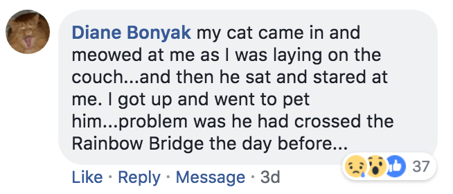 Text - Diane Bonyak my cat came in and meowed at me as I was laying on the couch...and then he sat and stared at me. I got up and went to pet him..problem was he had crossed the Rainbow Bridge the day before... 37 Like Reply Message 3d