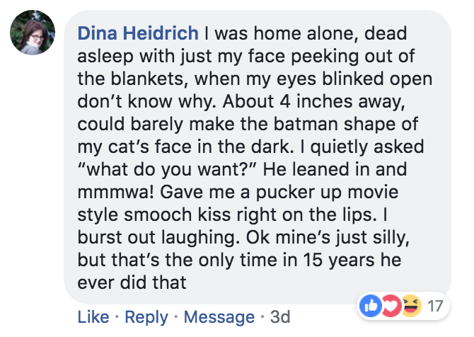 "Text - Dina Heidrich I was home alone, dead asleep with just my face peeking out of the blankets, when my eyes blinked open don't know why. About 4 inches away, could barely make the batman shape of my cat's face in the dark. I quietly asked ""what do you want?"" He leaned in and mmmwa! Gave me a pucker up movie style smooch kiss right on the lips. burst out laughing. Ok mine's just silly, but that's the only time in 15 years he ever did that Like Reply Message 3d"