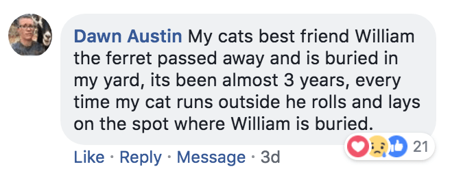 Text - Dawn Austin My cats best friend William the ferret passed away and is buried in my yard, its been almost 3 years, every time my cat runs outside he rolls and lays on the spot where William is buried. 21 Like Reply Message 3d