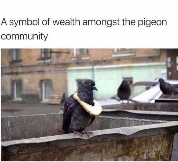 pigeon with necklace made of bread as a symbol of its wealth