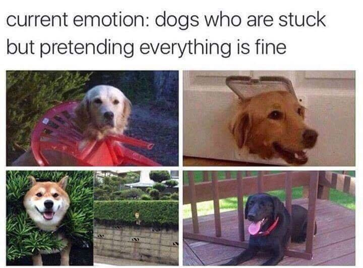meme about relating to dogs who appear stuck but still seem happy