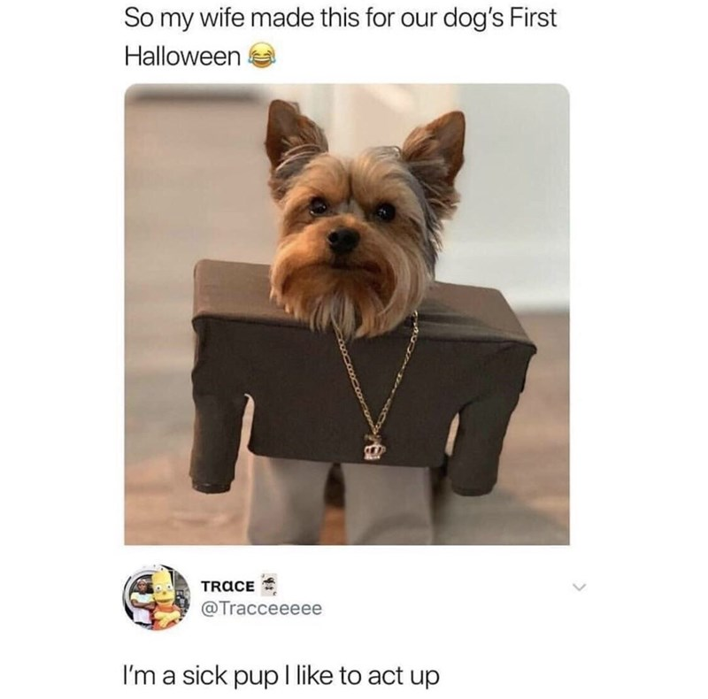 "tweet with picture of dog wearing Kanye West's ""I Love It"" costume"