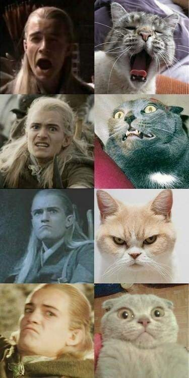 lotr meme with pictures of Legolas as cats