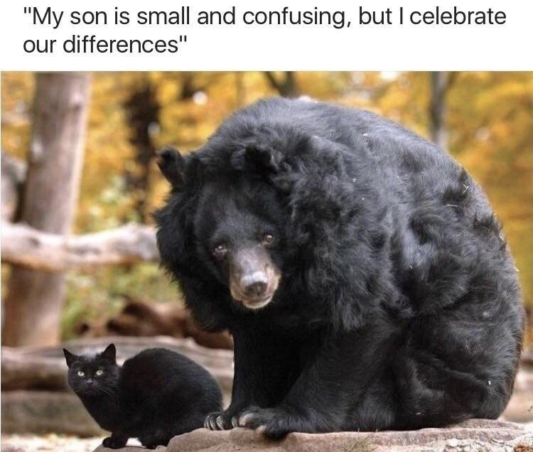 """Caption that reads, """"My son is small and confusing, but I celebrate our differences"""" above a pic of a black bear next to a black cat"""