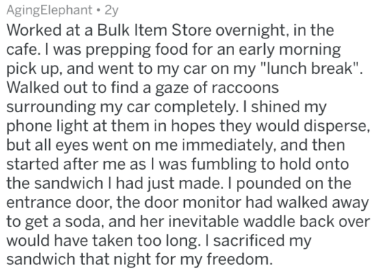 """Text - AgingElephant 2y Worked at a Bulk Item Store overnight, in the cafe. I was prepping food for an early morning pick up, and went to my car on my """"lunch break"""" Walked out to find a gaze of raccoons surrounding my car completely. I shined my phone light at them in hopes they would disperse but all eyes went on me immediately, and then started after me as I was fumbling to hold onto the sandwich I had just made. I pounded on the entrance door, the door monitor had walked away to get a soda, a"""