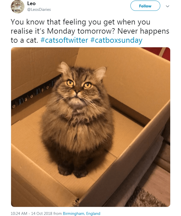 fluffy cat sitting inside a cardboard box Follow You know that feeling you get when you realise it's Monday tomorrow? Never happens to a cat.