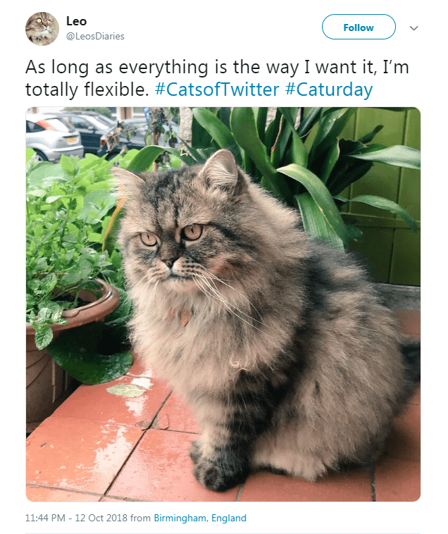 fluffy cat sitting next to plants looking slightly annoyed As long as everything is the way I want it, I'm totally flexible