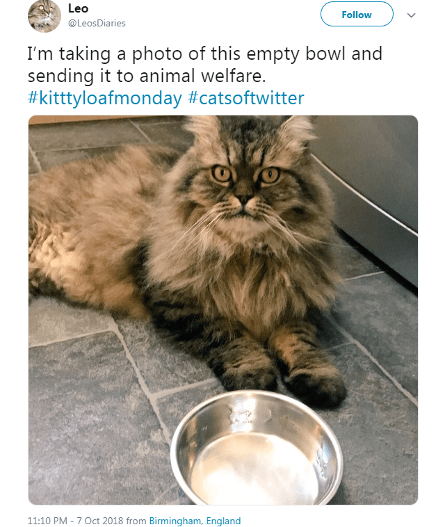 fluffy cat sitting in front of empty food bowl I'm taking a photo of this empty bowl and sending it to animal welfare. #kitttyloafmonday