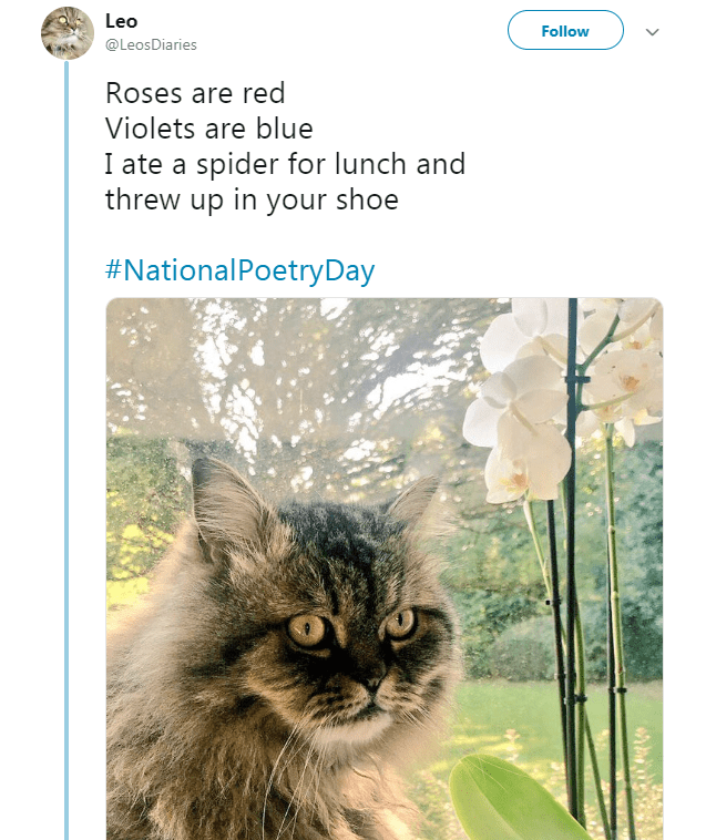 fluffy cat next to a window and garden Roses are red Violets are blue I ate a spider for lunch and threw up in your shoe