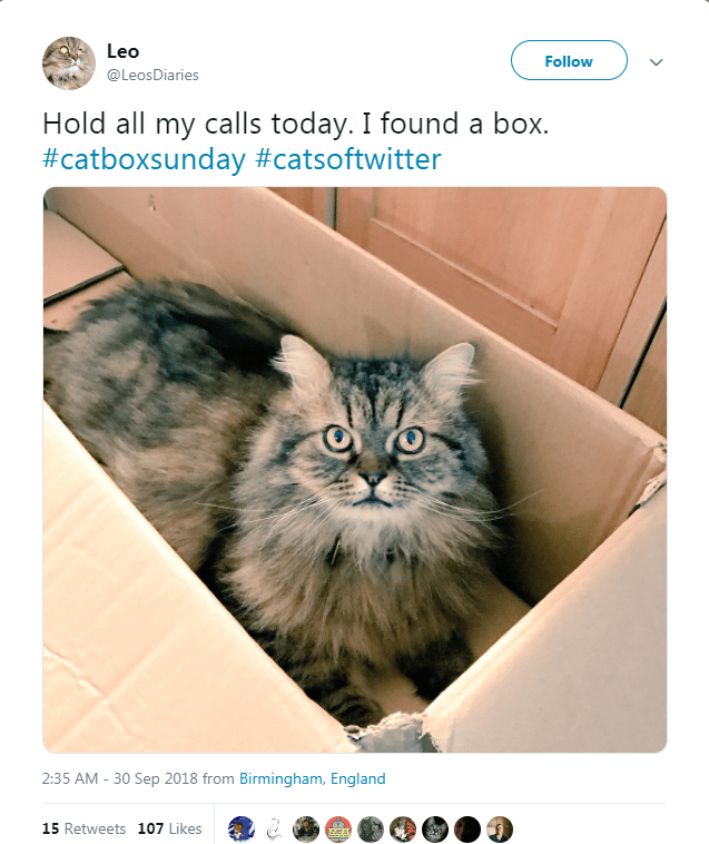 fluffy cat sitting inside cardboard box looking up Hold all my calls today. I found a box.