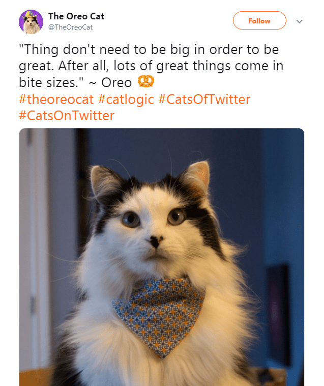 """Canidae - The Oreo Cat Follow @TheOreoCat """"Thing don't need to be big in order to be great. After all, lots of great things come in bite sizes."""" ~ Oreo #theoreocat #catlogic #CatsOfTwitter #CatsOnTwitter"""