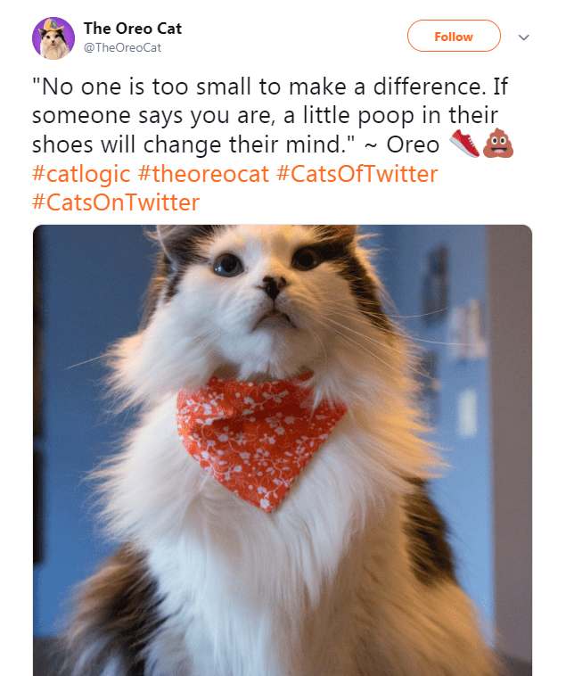 """Photo caption - The Oreo Cat Follow @TheOreoCat """"No one is too small to make a difference. If someone says you are, a little poop in their shoes will change their mind."""" ~ Oreo #catlogic #theoreocat #CatsOfTwitter #CatsOnTwitter"""