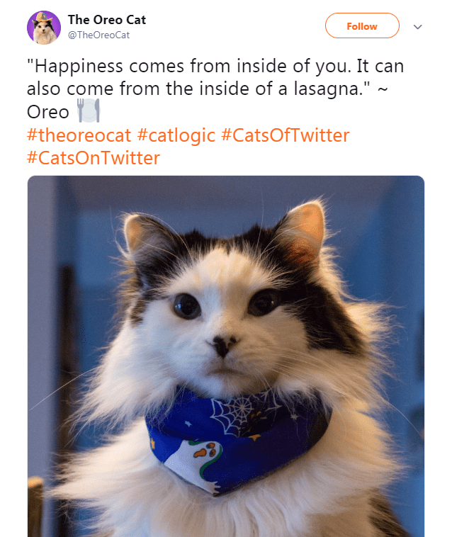 """Cat - The Oreo Cat Follow @TheOreoCat """"Happiness comes from inside of you. It can also come from the inside of a lasagna."""" - Oreo #theoreocat #catlogic #CatsOfTwitter #CatsOnTwitter"""