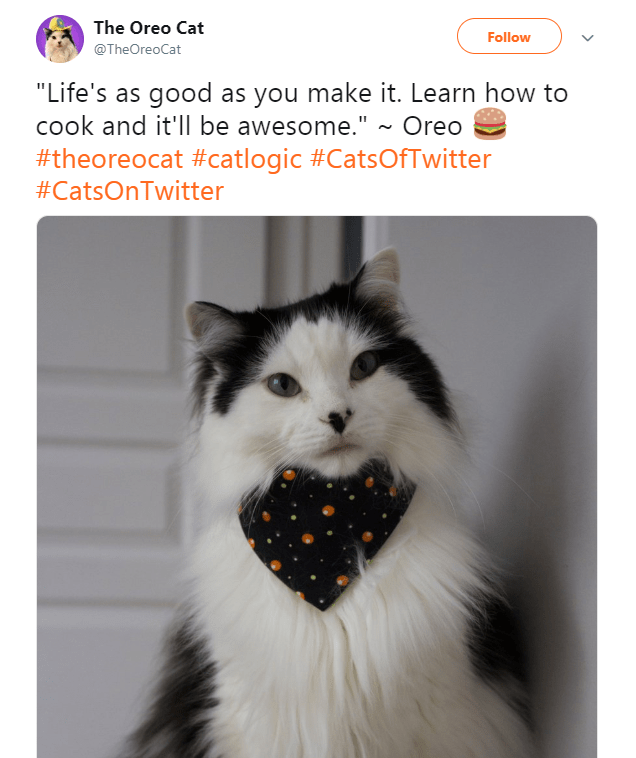"""Cat - The Oreo Cat Follow @TheOreoCat """"Life's as good as you make it. Learn how to cook and it'll be awesome."""" ~ Oreo #theoreocat #catlogic #CatsOfTwitter #CatsOnTwitter"""