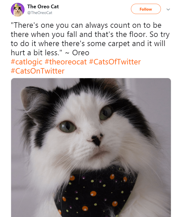 """Cat - The Oreo Cat Follow @TheOreoCat """"There's one you can always count on to be there when you fall and that's the floor. So try to do it where there's some carpet and it will hurt a bit less."""" ~ Oreo #catlogic #theoreocat #CatsOfTwitter #CatsOnTwitter"""