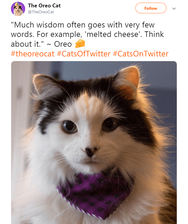 """Cat - The Oreo Cat Follow @TheOreoCat """"Much wisdom often goes with very few words. For example, 'melted cheese'. Think about it."""" Oreo #theoreocat #CatsOfTwitter #CatsOnTwitter"""