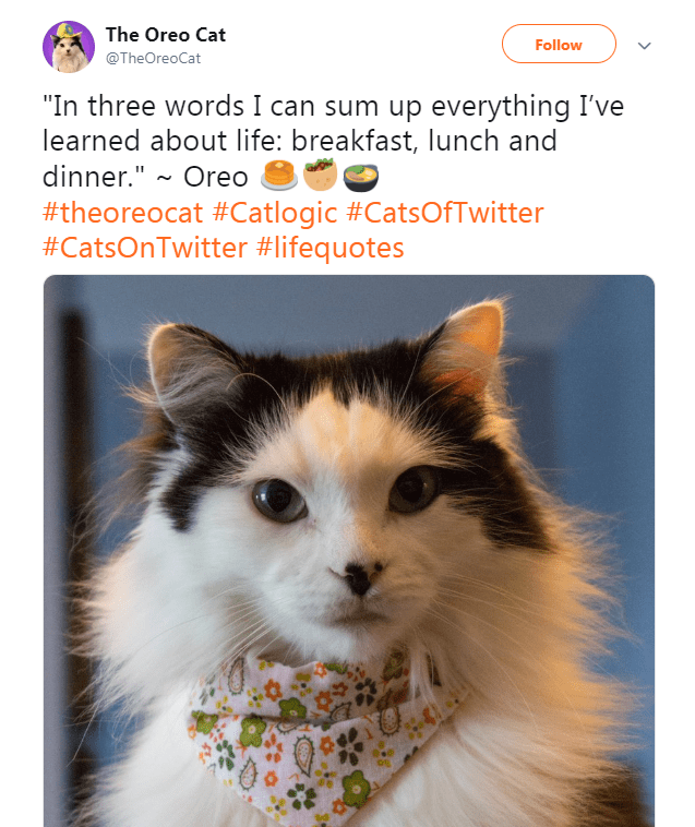"""Cat - The Oreo Cat Follow @TheOreoCat """"In three words I can sum up everything I've learned about life: breakfast, lunch and dinner.""""~ Oreo #theoreocat #Catlogic #CatsOfTwitter #CatsOnTwitter #lifequotes"""