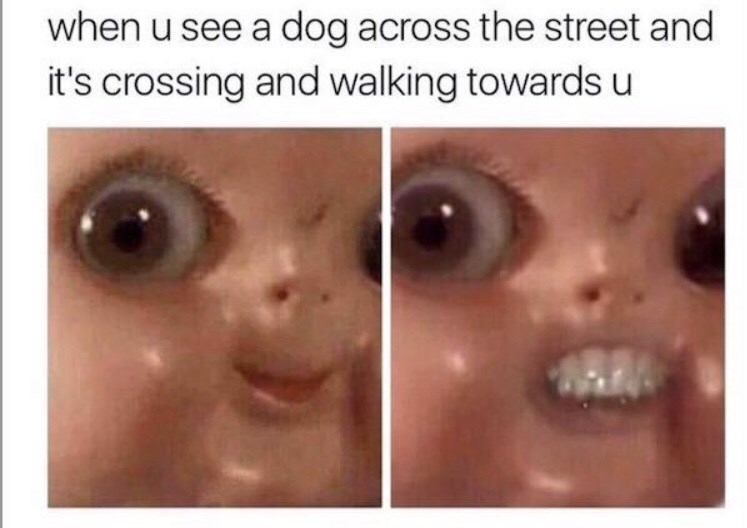 humpday meme about being approached by a dog
