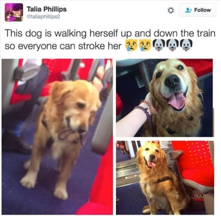 Dog - Talia Phillips etaliaphillips2 Follow This dog is walking herself up and down the train so everyone can stroke her OA