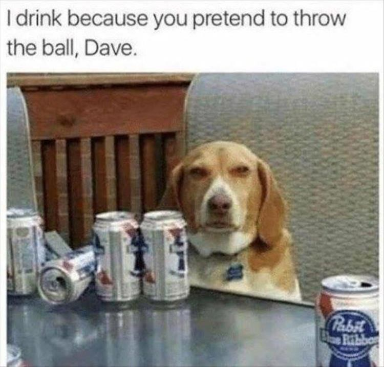 Dog - I drink because you pretend to throw the ball, Dave. Pabit Ribb