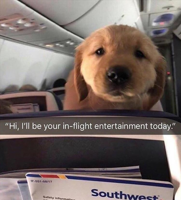 "Dog - ""Hi, I'll be your in-flight entertain ment today."" F-551-08/17 Southwesti Safety information"