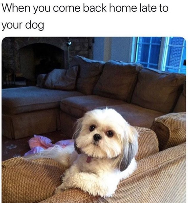 Dog - When you come back home late to your dog