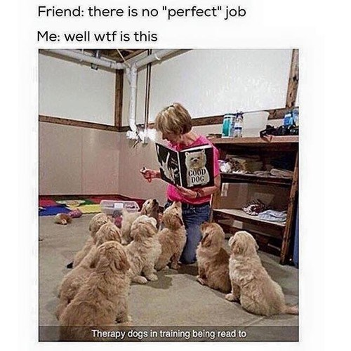 "Dog - Friend: there is no ""perfect"" job Me: well wtf is this GOOD DOG Therapy dogs in training being read to"