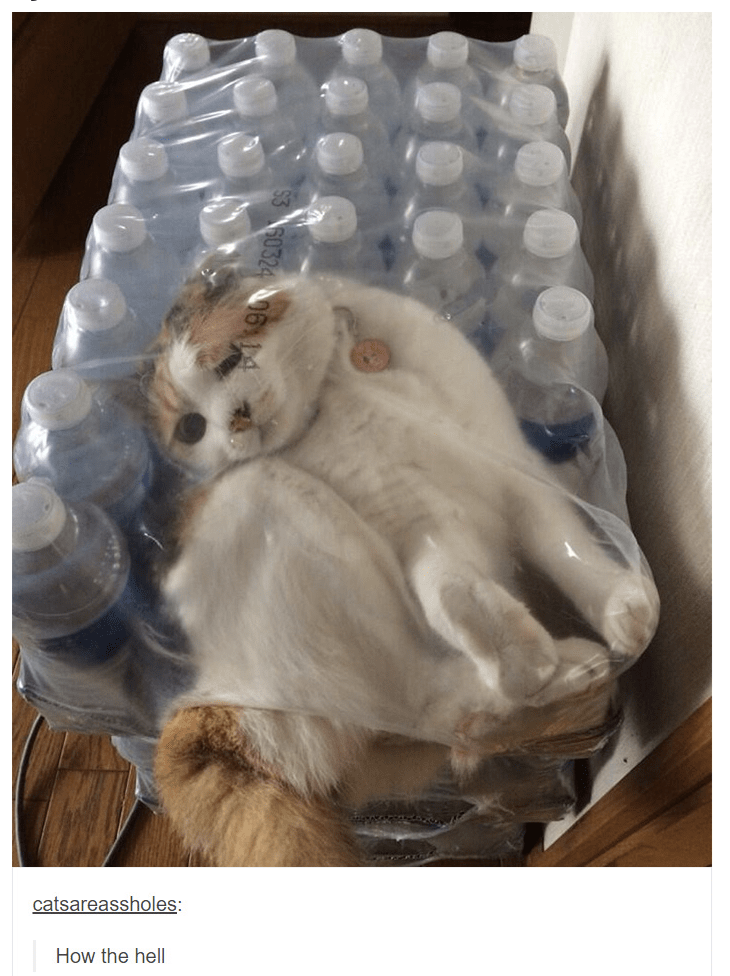 "Pic of a cat stuck in plastic water bottle packaging; someone comments beneath, ""What the hell"""