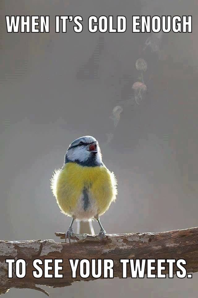 meme about the cold with photo of bird who's breath you can see and captioned with pun about cold enough to see your tweets