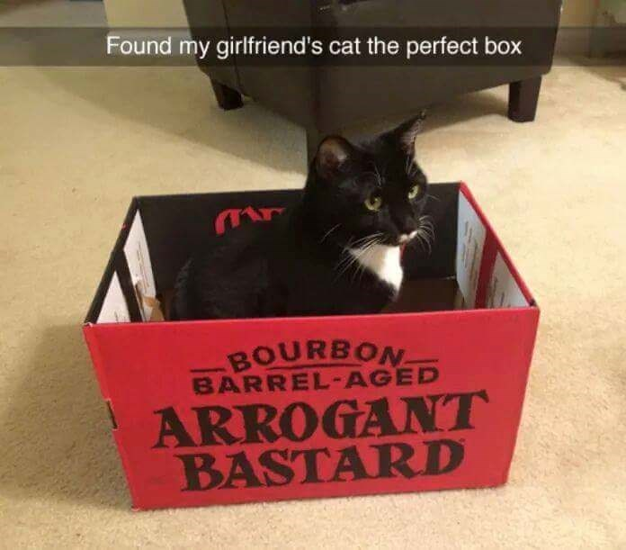 "Snapchat text overlay that reads, ""Found my girlfriend's cat the perfect box"" over a pic of a cat in a box labeled with ""Arrogant bastard"""