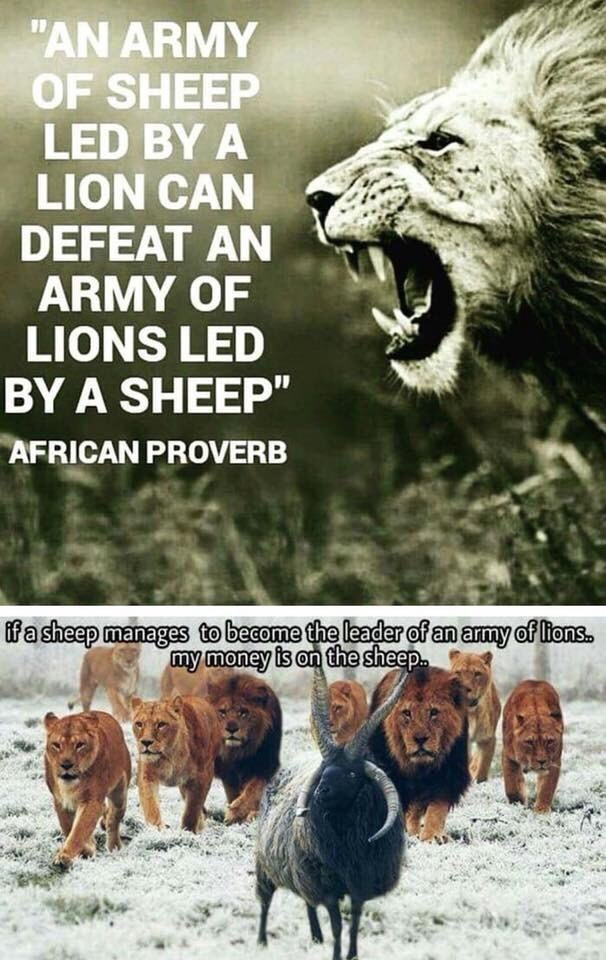 meme about African proverb with photo of a sheep leading an army of lions