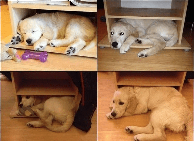 dogs cute doggo funny dogs - 9229586688