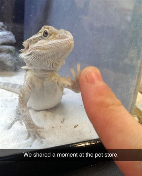 Reptile - We shared a moment at the pet store.
