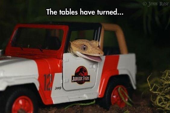 Car - O Jenn Rose The tables have turned... JAIRAIN PARK Jeep