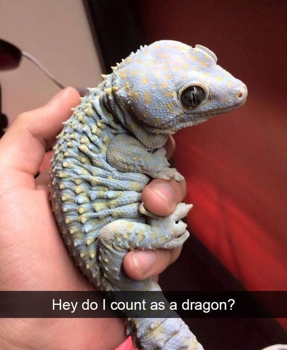 Reptile - Hey do I count as a dragon?