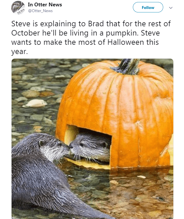 Pumpkin - In Otter News @Otter_News NEWS Follow Steve is explaining to Brad that for the rest of October he'll be living in a pumpkin. Steve wants to make the most of Halloween this year.