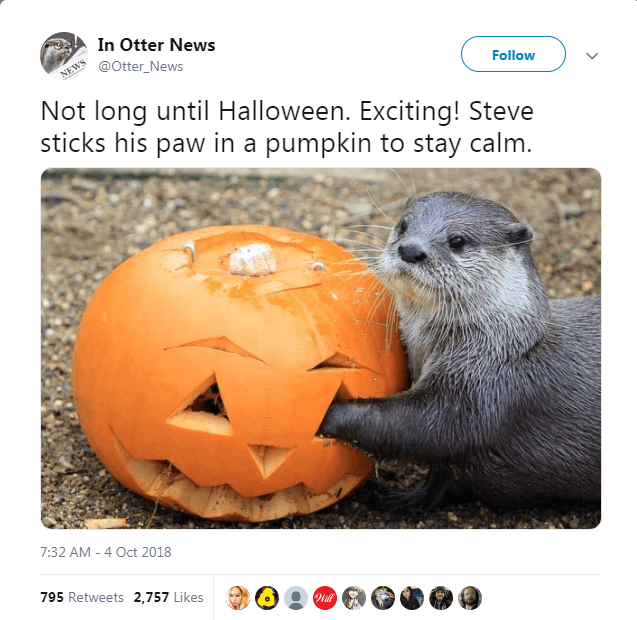Gopher - In Otter News @Otter_News NEWS Follow Not long until Halloween. Exciting! Steve sticks his paw in a pumpkin to stay calm. 7:32 AM 4 Oct 2018 795 Retweets 2,757 Likes