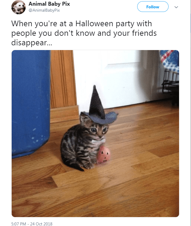 Cat - Animal Baby Pix Follow @AnimalBabyPix When you're at a Halloween party with people you don't know and your friends disappear... 5:07 PM -24 Oct 2018