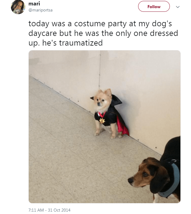 Dog - mari Follow @mariportsa today was a costume party at my dog's daycare but he was the only one dressed up. he's traumatized 7:11 AM - 31 Oct 2014