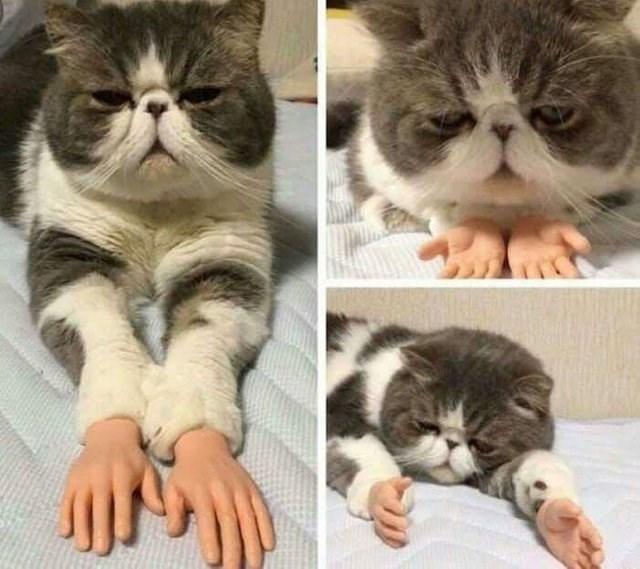 optical illusion - Cat