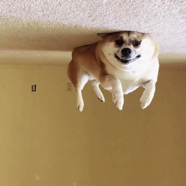 optical illusion - Dog