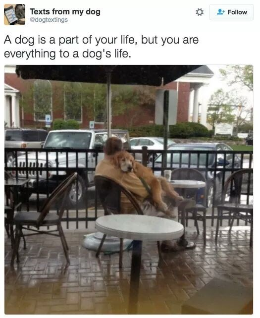 """picture of man cuddling a dog captioned """"a dog is part of you life, but you are everything to a dog's life"""""""