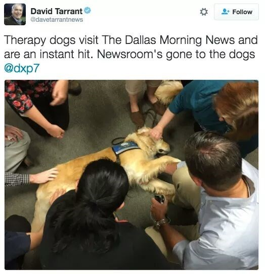therapy dog visiting news station lying in a circle of petting hands