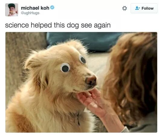 """dog with googly eyes captioned """"science helped this dog see again"""""""